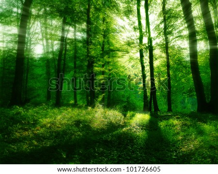 Spring green forest with sunbeams - stock photo
