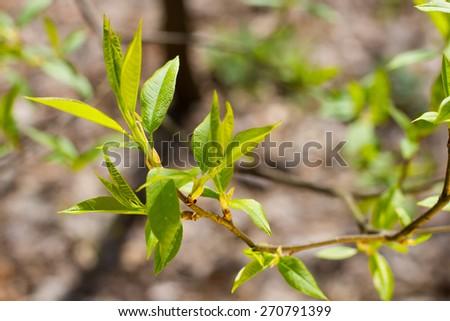 Spring green garden with lush foliage. - stock photo