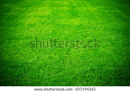 spring green grass for design - stock photo