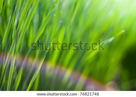 Spring green grass in the sun - stock photo