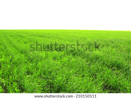 Spring green grass - isolated over white - stock photo