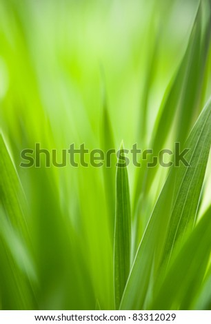 Spring: green grass with shallow DOF.Useful as environmental pattern - stock photo