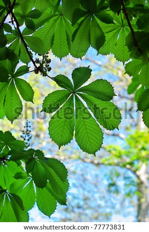 Spring green leaf. Nature composition. - stock photo