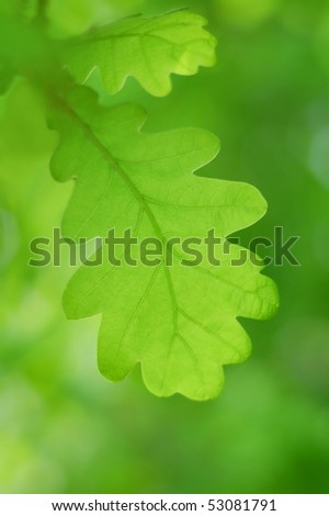 Spring green leaf over blurred background. Shallow focus. - stock photo