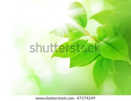 Spring Green Leaves border - stock photo