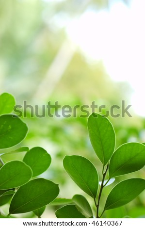 Spring green leaves. Shallow DOF. - stock photo