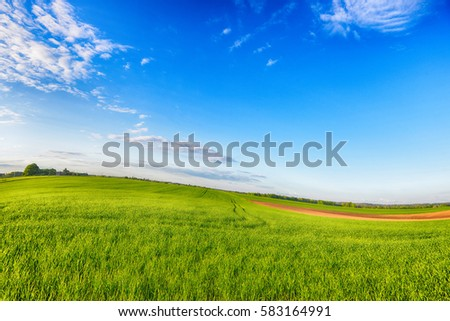 spring  green meadow and sky.  landscape