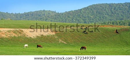 Spring green meadow with horses and a forest on a hill as a background