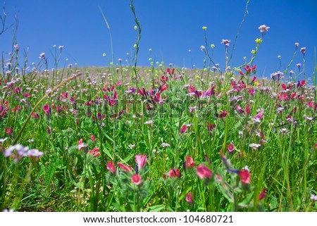 Spring green meadow with wild flowers blooming under blue sky.