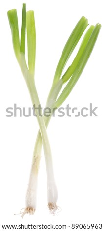 Spring Green Onion Isolated on White.