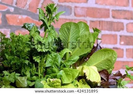 Spring greens - stock photo