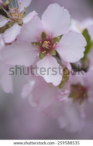 Spring header with with pink flower, - stock photo
