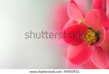 Spring header with with pink flower, shallow depth of filed - stock photo