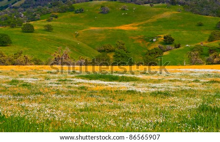 Spring Hills with yellow white flowers, green grass and oak tree - stock photo