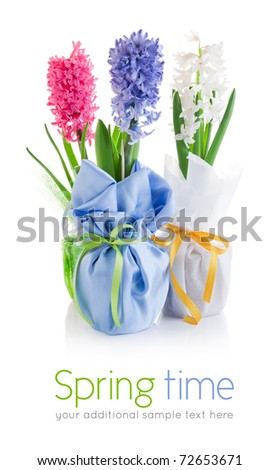 spring hyacinth flowers with green leaves in textile wrapping isolated on white background - stock photo