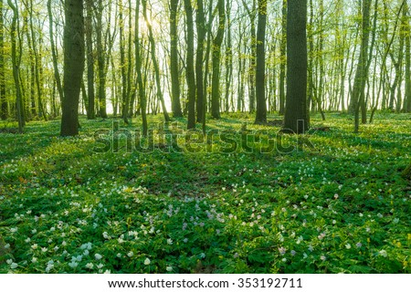 spring in a forest Freyburg/Unstrut in Germany - stock photo