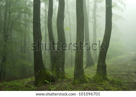 spring in a green forest