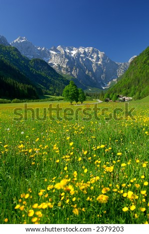 Spring in alpine valley in northern Slovenia