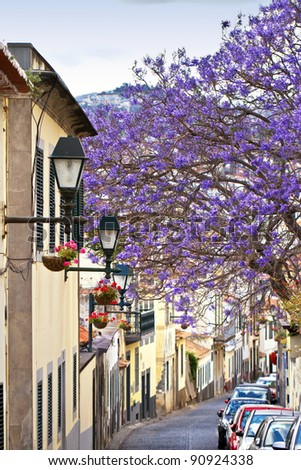 Spring in Funchal, Madeira. - stock photo