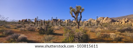 Spring in Joshua Tree National Park, California - stock photo