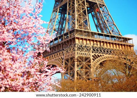 Spring in Paris. Blossoming cherry tree and Eiffel tower. Focus on the Eiffel tower - stock photo