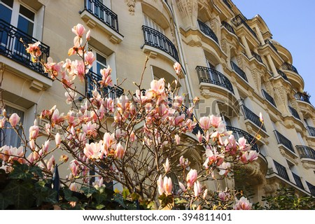 Spring in Paris. Blossoming Magnolia tree and typical Parisian building. - stock photo