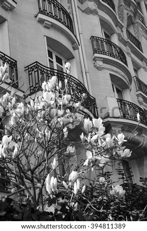 Spring in Paris. Blossoming Magnolia tree and typical Parisian building. Aged photo. Black and white. - stock photo