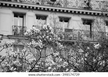 Spring in Paris. Blossoming Magnolia tree and typical Parisian building with French flag hanging out from balcony. Aged photo. Black and white. - stock photo