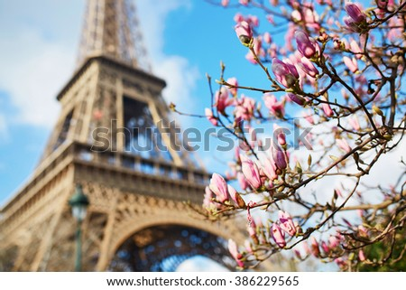 Spring in Paris. Pink magnolia and Eiffel tower - stock photo