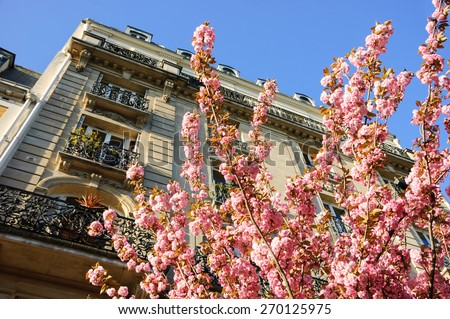 Spring in Paris. Typical Parisian building and blossoming pink tree. - stock photo