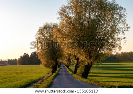 Spring in Sweden - Car drives through a parkway in the countryside of Vikbolandet, Ostergotland, Sweden on a late evening at spring time. - stock photo