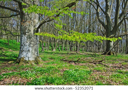 Spring in Swedish forest - stock photo