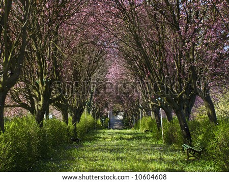 spring in the fairyland - stock photo