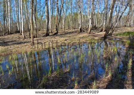 Spring in the forest. Spring forest landscape in the national Park of Central Russia. - stock photo