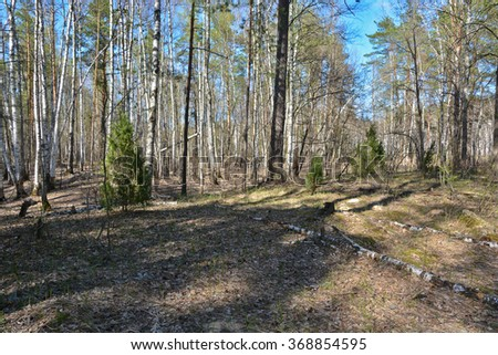 Spring in the forest. Spring forest landscape in the national Park of Central Russia.