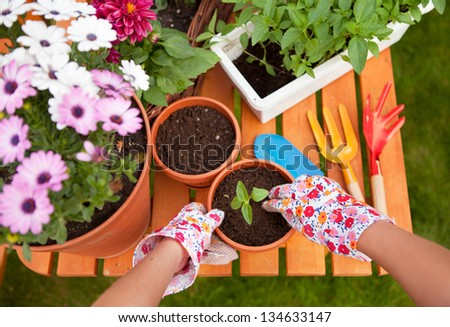 Spring garden potting flowers stock photo royalty free 134633147 spring in the garden potting flowers mightylinksfo