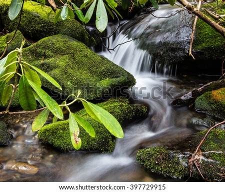 Spring In The Great Smoky Mountains. Wild rhododendron flourish along a stream in the Great Smoky Mountains National Park in Gatlinburg, Tennessee.  - stock photo