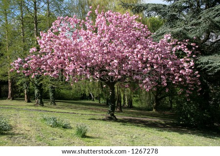 Spring in the park - stock photo