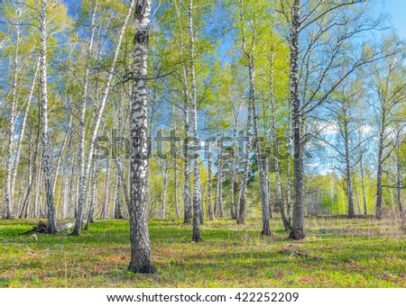Spring in the Siberian forest. - stock photo