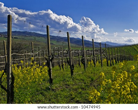 spring in the vineyard - stock photo