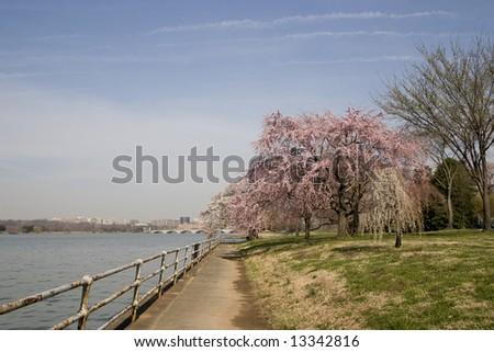 Spring in Washington D.C. - stock photo