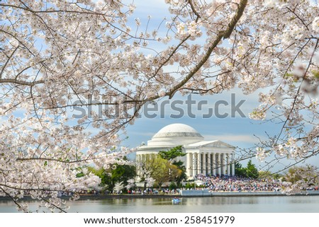 Spring in Washington DC - Cherry blossoms and Jefferson Memorial - stock photo