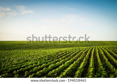 spring inputs striped fields - stock photo