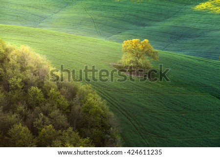 Spring land with a lone tree in the middle of a green field. - stock photo