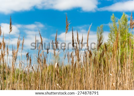 spring landscape at the lake - stock photo