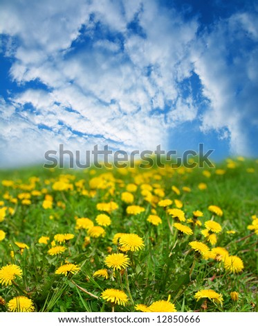 Spring landscape blue sky and yellow flowers
