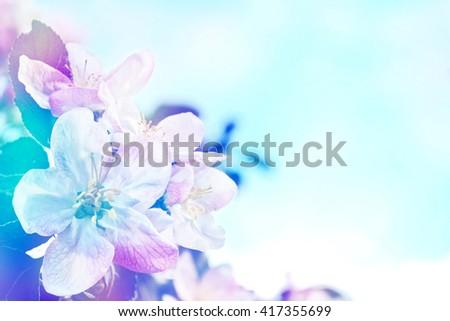 spring landscape. Flowering apple tree. Spring flowering garden. - stock photo