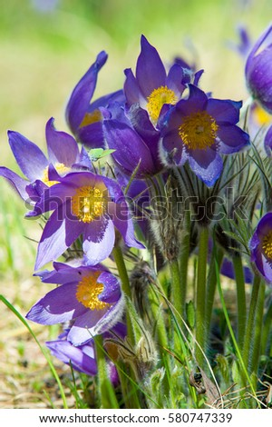 Spring flowers pictures and names spring landscape flowers growing spring landscape flowers growing in the wild spring flower pulsatilla common names include mightylinksfo
