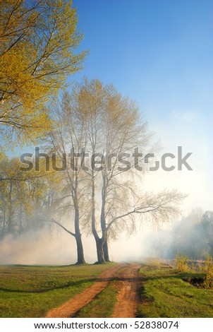 spring landscape, forest in fog - stock photo