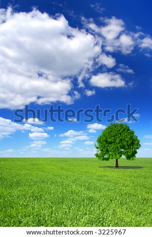 Spring landscape - green field, the blue sky, white clouds and lonely tree